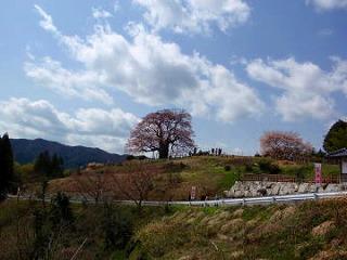 Sdaigozakura